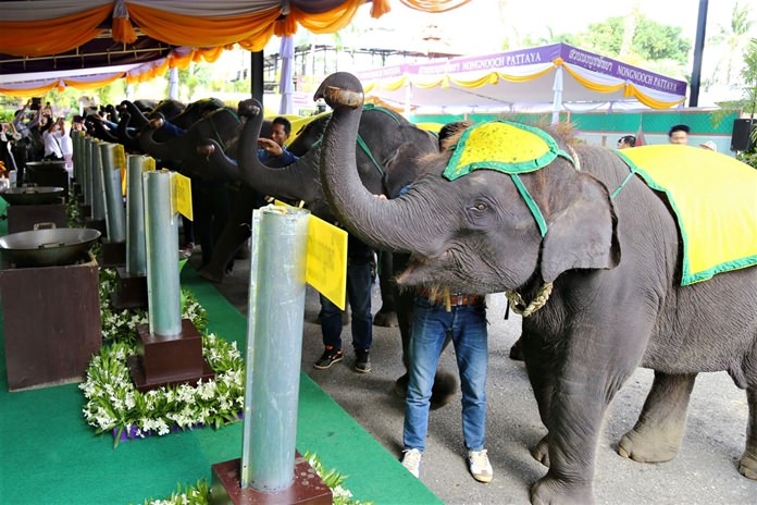 ช้างแสนรู้สวนนงนุชพัทยา 9 เชือก ร่วมนักท่องเที่ยว หล่อเทียนพรรษา 9 วัน 9 วัด