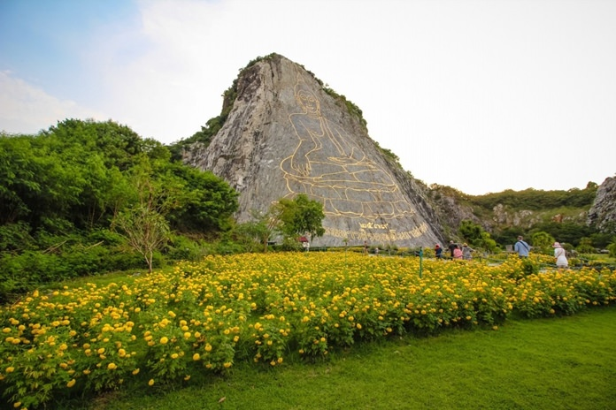นักท่องเที่ยวแห่เก็บภาพ ดอกดาวเรือง-ทานตะวัน บริเวณเขาชีจรรย์  ที่ขณะนี้เบ่งบานเหลืองอร่าม ก่อนงานพระราชพิธีถวายพระเพลิงพระบรมศพ ในหลวง รัชกาลที่ 9.