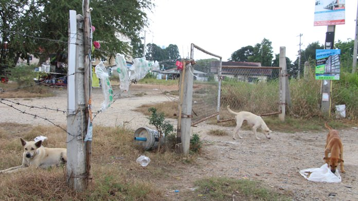 """มพย.สั่งทุกหน่วยงานจับตา """"แหล่งสุนัขจรจัด""""เฝ้าระวังในพื้นที่รกร้าง พบเห็นให้แจ้งสำนักการสาธารณสุขเมืองพัทยาโทรศัพท์ 0 38-11 1826 หรือ คอลเซ็นเตอร์ 1337"""