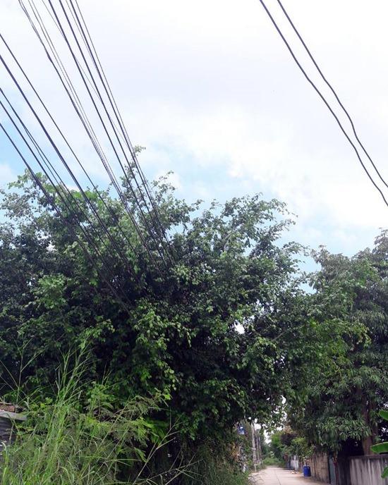 ชาวบ้านพรประภานิมิตร 28 ร้องเรียนกิ่งไม้ปกคลุมสายไฟฟ้าแรงสูง