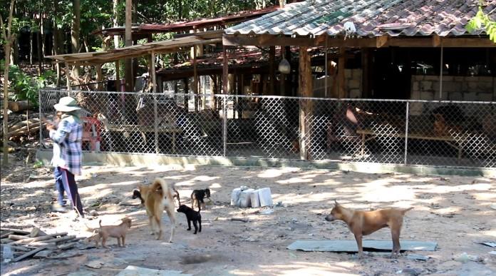 เทศบาลหนองปรือ เตรียมแก้ไขปัญหาสุนัขจรจัดล้นพื้นที่  เดินหน้าจัดสร้างสถานที่พักสุนัขเนื้อที่ 4 ไร่