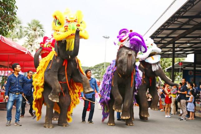 ช้างแสนรู้ สวนนงนุชพัทยา เชิดสิงโตต้อนรับเทศกาลตรุษจีน สุดยิ่งใหญ่