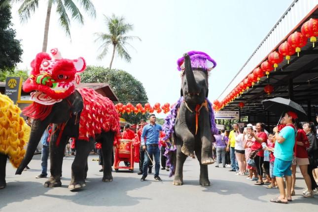 ช้างแสนรู้สวนนงนุชพัทยา เชิดสิงโต รับเทศกาลตรุษจีนยิ่งใหญ่