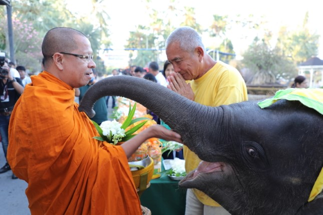 ช้างสวนนงนุชพัทยา 87 เชือก ตักบาตรอุทิศส่วนกุศล ดวงวิญญาณช้างกอบกู้เอกราชชาติไทย