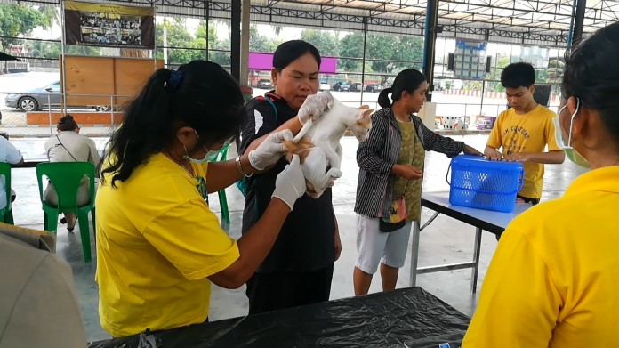 ทม.หนองปลาไหล  เดินหน้าฉีดวัคซีนป้องกันโรคพิษสุนัขบ้าให้สุนัขและแมว  เดินหน้าปูพรหมทั่วตำบล