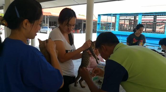 สำนักการสาธารณสุขเมืองพัทยา  ทำหมัน  ฉีดวัคซีนป้องกันโรคพิษสุนัขบ้าให้กับสุนัขและแมว  ชุมชนวัดธรรมสามัคคี