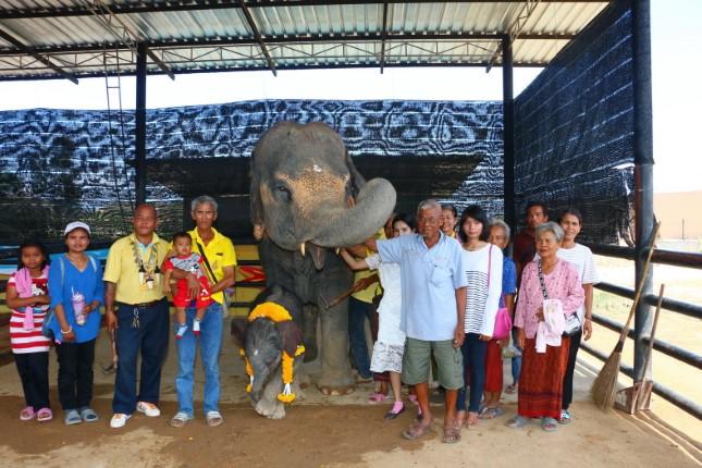 ทุบสถิติ!  ช้างพังโบม่า ญาติเยอะสุด ในปางช้างสวนนงนุชพัทยา
