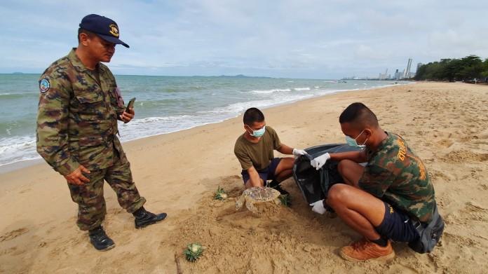 ทหารเรือกู้ซากลูกเต่าทะเล กินถุงพลาสติกสิ้นใจตาย เกยหาดนาจอมเทียน