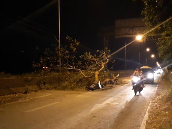 ฝนตกและมีลมกรรโชกแรง ต้นไม้ขนาดใหญ่ล้มโค่นขวางถนน