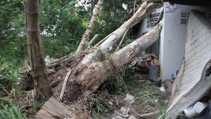พายุฝนค้าคะนองลมแรง ต้นไม้ขนาดใหญ่ล้มทับบ้านเรือนและรถยนต์เสียหาย
