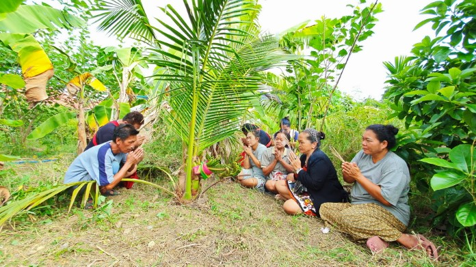 ชาวบ้านแห่ขอโชคลาภ ต้นมะพร้าวประหลาด คล้ายเศียรพญานาค