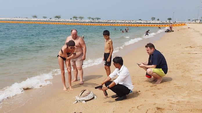 นักท่องเที่ยวตื่น! เต่าทะเล ถูกใบฟันเรือฟันตาย เกยชายหาดบ้านอำเภอ